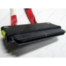 SATA-кабель для корзины HDD HP 451782-001 459190-001 для HP ML310 G5 (Фрязино)